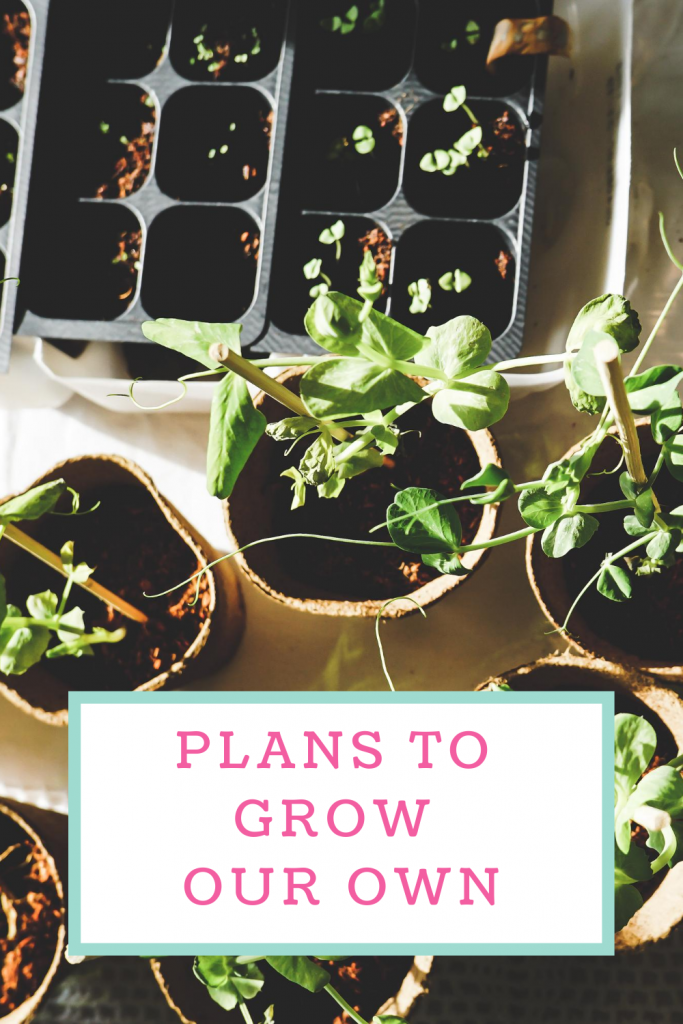 Plans to grow our own